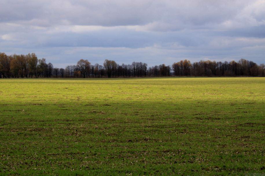 Vente de terrain : tout ce qu'il faut savoir avant d'acheter un terrain constructible