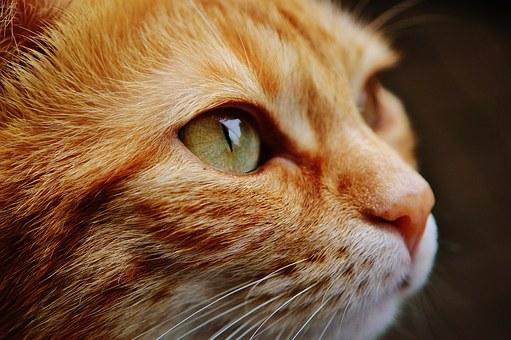 Protégez vos animaux de compagnie contre les parasites